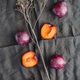 High angle view of fresh purple plum on a dark linen. Food photography still life. - PhotoDune Item for Sale