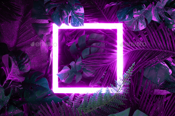 Creative fluorescent color layout made of tropical leaves with neon light square. - Stock Photo - Images