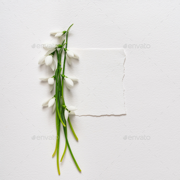 Creative layout made with snowdrop flowers with paper card note. Minimal nature love background.