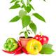 Pepper plant - PhotoDune Item for Sale