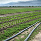 Planted agriculture land and pipe for watering. - PhotoDune Item for Sale