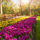 View at beautiful Keukenhof park flower lawns under blue sky during annual exhibition - PhotoDune Item for Sale