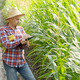 Farmer in straw hat with clipboard inspecting corn at field somewhere in Ukraine - PhotoDune Item for Sale