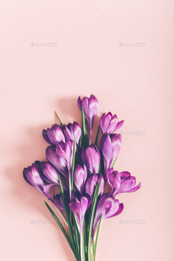Layout From Crocus Flowers Stock Photo By Manuta Photodune