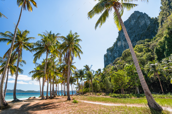 El Nido, Palawan, Philippines. Palm trees on tropical beach with rock cliffs in background. Island - Stock Photo - Images