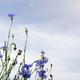 spring blossom - PhotoDune Item for Sale