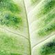 Macro View on Green Leaf. - PhotoDune Item for Sale