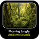 Morning Jungle Ambient
