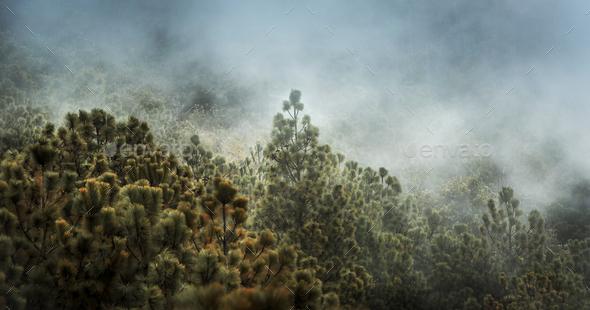 Guatemala Forest Landscape On Acatenango Volcano - Stock Photo - Images