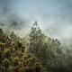 Guatemala Forest Landscape On Acatenango Volcano - PhotoDune Item for Sale