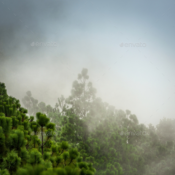 Guatemala Forest Landscape On Acatenango Volcano - Stock Photo - Images