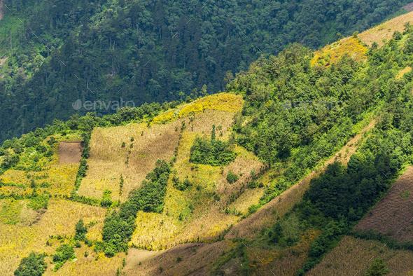 Guatemala Hillside Farming - Stock Photo - Images