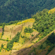 Guatemala Hillside Farming - PhotoDune Item for Sale