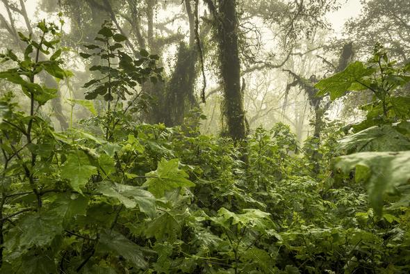 Guatemala Jungle Landscape - Stock Photo - Images
