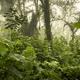 Guatemala Jungle Landscape - PhotoDune Item for Sale