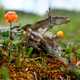 Cloudberry growning on swamp closeup in summer - PhotoDune Item for Sale