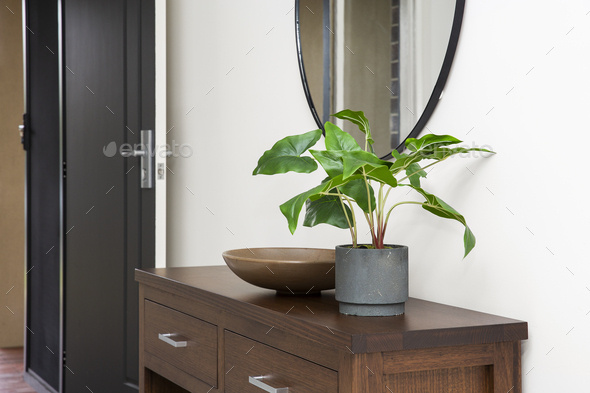 Indoor Plants - Stock Photo - Images