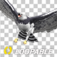 Harpy Eagle - Flying Transition - II - VideoHive Item for Sale