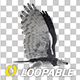 Harpy Eagle - Flying Loop - Side View - VideoHive Item for Sale