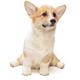 Funny Pembroke Corgi puppy - PhotoDune Item for Sale
