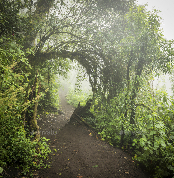 Forest Path Through Jungle Landscape - Stock Photo - Images