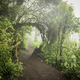 Forest Path Through Jungle Landscape - PhotoDune Item for Sale