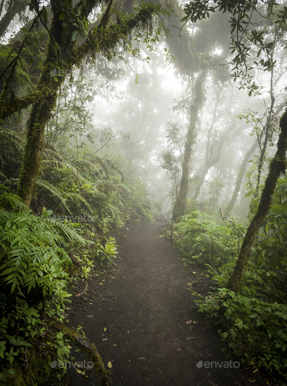 Moody Jungle Landscape With Fog - Stock Photo - Images