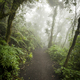 Moody Jungle Landscape With Fog - PhotoDune Item for Sale