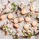 Flat-lay of sweet macaron cookies and spring blossom flowers - PhotoDune Item for Sale