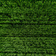 Aerial top view of Green Country Field with row lines. - PhotoDune Item for Sale