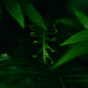 Background of the dark green leaves - PhotoDune Item for Sale