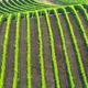 Vine Rows - PhotoDune Item for Sale