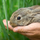 Rabbit. Animal in man hands - PhotoDune Item for Sale
