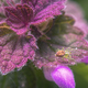 Tiny Spider into a small Purple Flower - PhotoDune Item for Sale