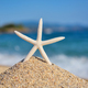 A white starfish on the beach against the background of the sea and the blue sky on a hot sunny day - PhotoDune Item for Sale