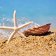 White starfish and a shell on the beach - PhotoDune Item for Sale