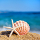 A white starfish and a shell on the beach against the background of the sea. Summer concept - PhotoDune Item for Sale