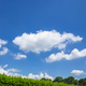 Hedge against amazing sky - PhotoDune Item for Sale