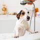Dog taking a bath in a bathtub - PhotoDune Item for Sale