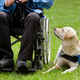 Labrador guide dog and his disabled owner - PhotoDune Item for Sale