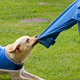 Dog removes the jacket to his disabled owner. - PhotoDune Item for Sale