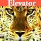 The Elevator Music