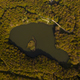 mountain lake in a beech forest photographed from the sky with drone - PhotoDune Item for Sale