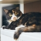 Cute cat is relaxig at home - PhotoDune Item for Sale