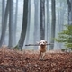 Happy dog running with stick in mouth - PhotoDune Item for Sale