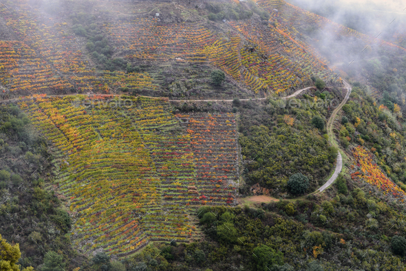 Agricultural Roads leading to Vineyards - Stock Photo - Images