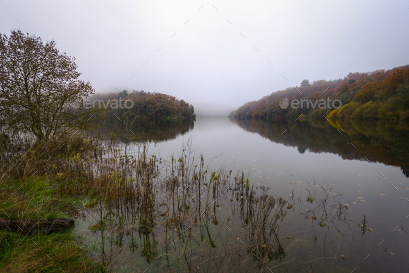 Foggy Morning next to a River with calm waters - Stock Photo - Images