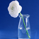 Spring composition with a white flower in a glass bottle on a blue background - PhotoDune Item for Sale