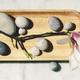 beautiful spring magnolia - PhotoDune Item for Sale