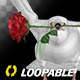 White Dove with Red Rose - Flying Loop - Front View - VideoHive Item for Sale